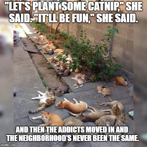 "Catnip Neighborhood | ""LET'S PLANT SOME CATNIP,"" SHE SAID. ""IT'LL BE FUN,"" SHE SAID. AND THEN THE ADDICTS MOVED IN AND THE NEIGHBORHOOD'S NEVER BEEN THE SAME. 