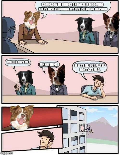 Boardroom Meeting Suggestion Meme | SOMEBODY IN HERE IS AN IMGFLIP MOD WHO KEEPS DISAPPROVING MY POSTS FOR NO REASON! WELL IT AIN'T ME. ME NEITHER. IT WAS ME, BUT PLEASE DON'T  | image tagged in memes,chili the border collie,dogs,border collie,imgflip mods,imgflip trolls | made w/ Imgflip meme maker