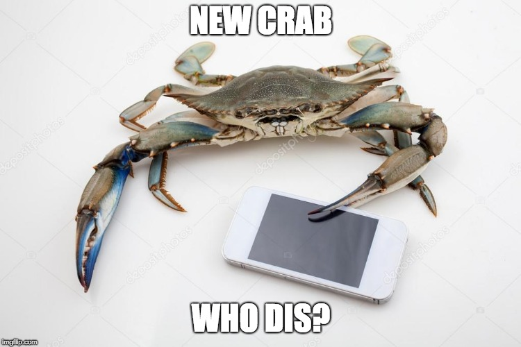 New crab, who dis? | NEW CRAB WHO DIS? | image tagged in new phone who dis,crabs | made w/ Imgflip meme maker