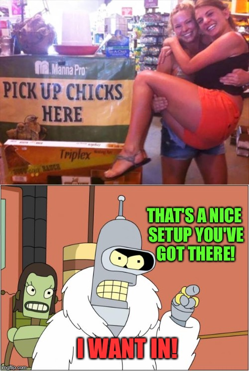I don't know what their refund policy is though. | I WANT IN! THAT'S A NICE SETUP YOU'VE GOT THERE! | image tagged in chicks,bender,memes,funny | made w/ Imgflip meme maker