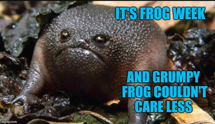 Introducing Grumpy Frog! Frog Week, June 4-10, a JBmemegeek & giveuahint event! (Template link in comments) | IT'S FROG WEEK AND GRUMPY FROG COULDN'T CARE LESS | image tagged in grumpy frog,frog week,jbmemegeek,giveuahint,frogs,funny animals | made w/ Imgflip meme maker