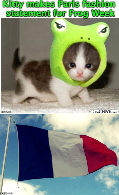 FROG WEEK FASHION | Kitty makes Paris fashion statement for Frog Week | image tagged in frog week,fashion,kitty,paris | made w/ Imgflip meme maker