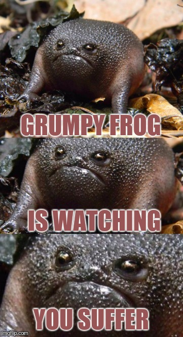 GRUMPY FROG YOU SUFFER IS WATCHING | made w/ Imgflip meme maker