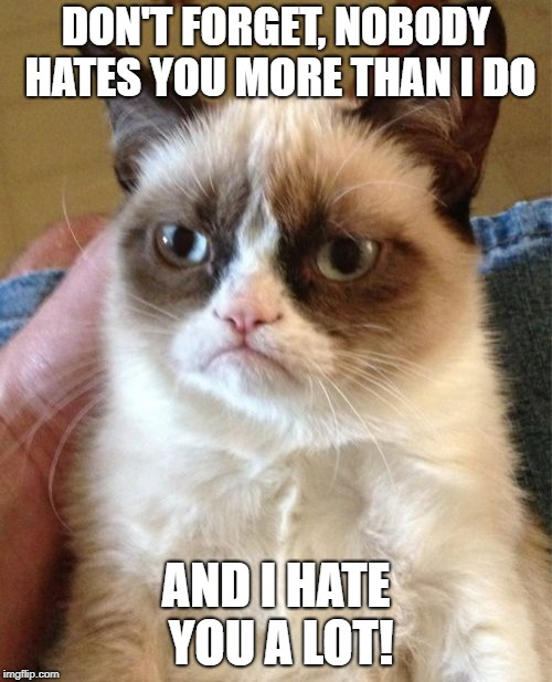 Poor grumpy cat SMH. | DON'T FORGET, NOBODY HATES YOU MORE THAN I DO AND I HATE YOU A LOT! | image tagged in memes,grumpy cat | made w/ Imgflip meme maker