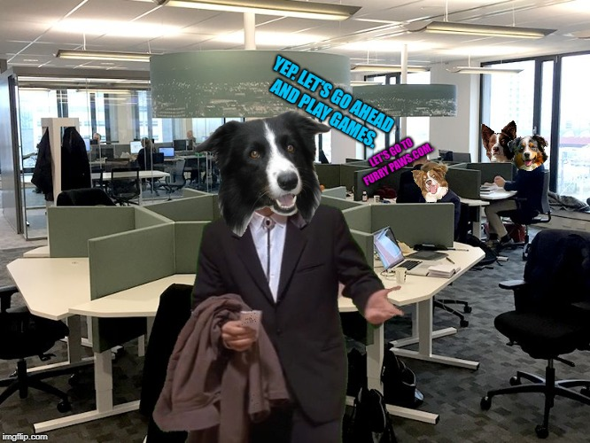 When I See my new office for the first time... | LET'S GO TO FURRY PAWS.COM. YEP. LET'S GO AHEAD AND PLAY GAMES. | image tagged in chili the border collie,dogs,border collie,australian shepherd | made w/ Imgflip meme maker