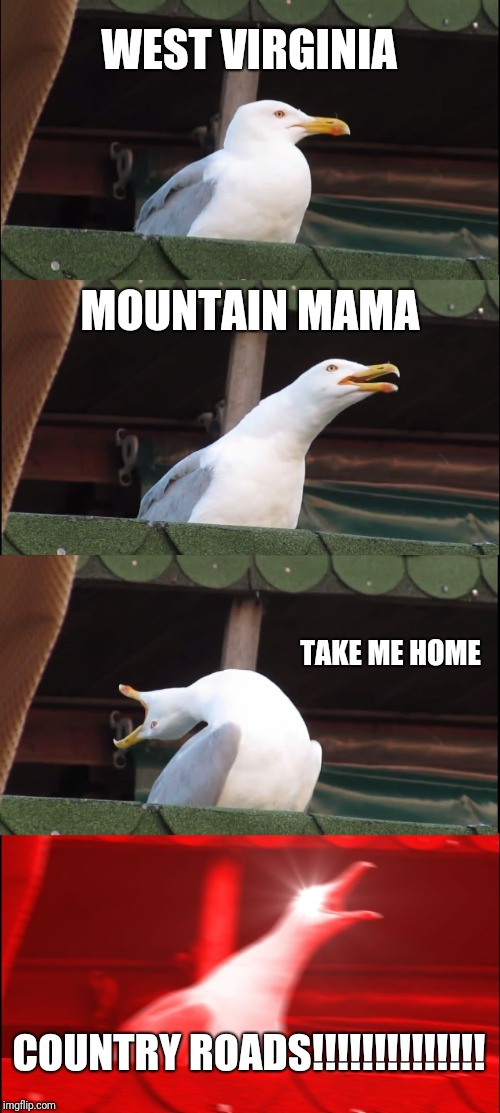 Inhaling Seagull Meme | WEST VIRGINIA MOUNTAIN MAMA TAKE ME HOME COUNTRY ROADS!!!!!!!!!!!!!! | image tagged in memes,inhaling seagull | made w/ Imgflip meme maker