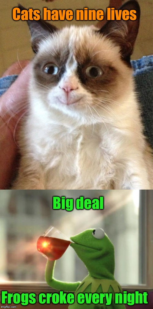 Frog week | Cats have nine lives Big deal Frogs croke every night | image tagged in memes,frog week,cats,frogs | made w/ Imgflip meme maker