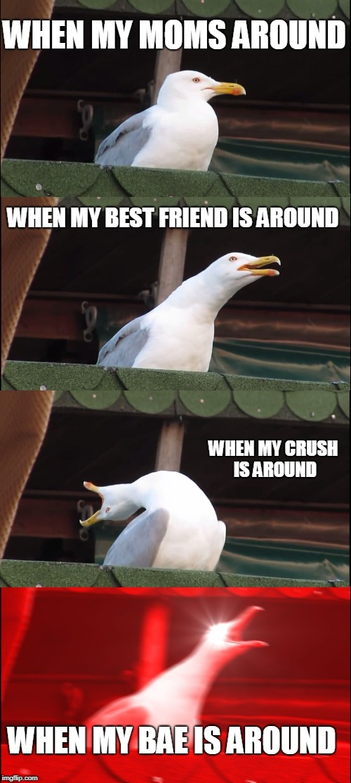 Inhaling Seagull Meme | WHEN MY MOMS AROUND WHEN MY BEST FRIEND IS AROUND WHEN MY CRUSH IS AROUND WHEN MY BAE IS AROUND | image tagged in memes,inhaling seagull | made w/ Imgflip meme maker