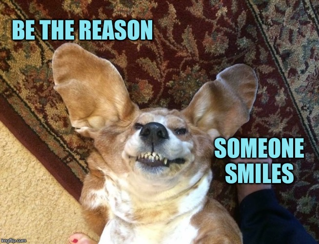 Smile | BE THE REASON SOMEONE SMILES | image tagged in kindness,smile,basset hound,happy,love | made w/ Imgflip meme maker