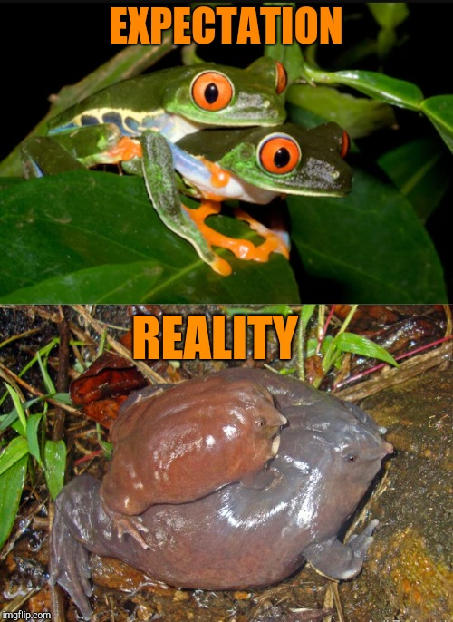Frog Week, June 4-10, a JBmemegeek & giveuahint event! |  EXPECTATION; REALITY | image tagged in frog week,jbmemegeek,giveuahint,expectation vs reality,frogs,memes | made w/ Imgflip meme maker