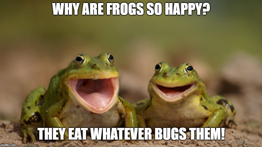 WHY ARE FROGS SO HAPPY? THEY EAT WHATEVER BUGS THEM! | image tagged in puns | made w/ Imgflip meme maker