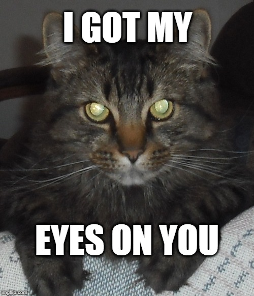 Murdoch has his eyes on you. | I GOT MY EYES ON YOU | image tagged in cat,eyes,message,murdoch,dark | made w/ Imgflip meme maker