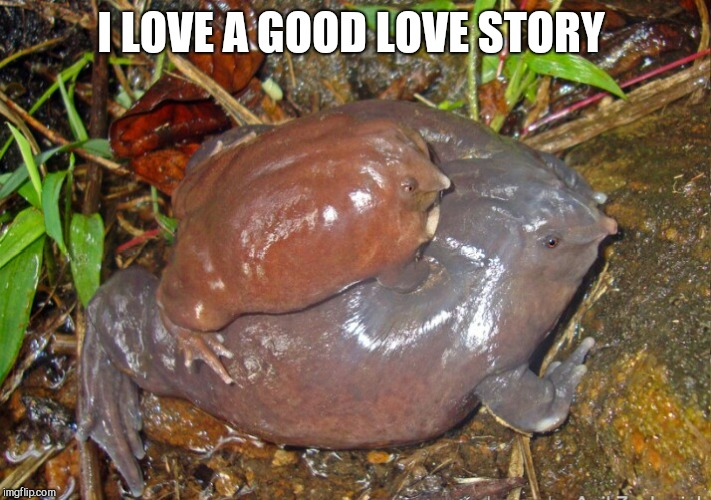 I LOVE A GOOD LOVE STORY | made w/ Imgflip meme maker