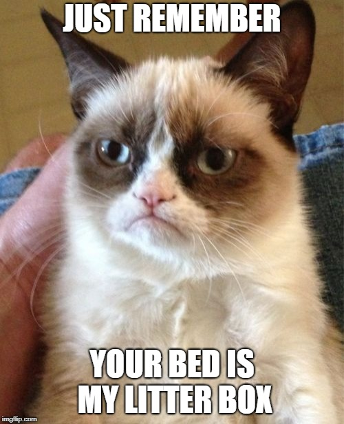 Grumpy Cat Meme | JUST REMEMBER YOUR BED IS MY LITTER BOX | image tagged in memes,grumpy cat | made w/ Imgflip meme maker
