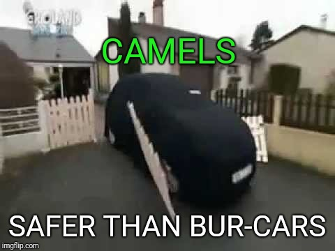 CAMELS SAFER THAN BUR-CARS | made w/ Imgflip meme maker