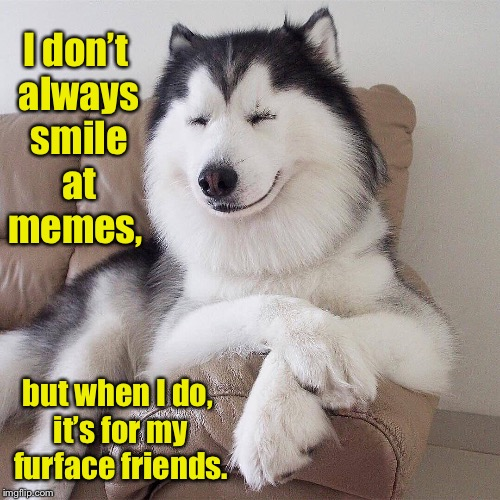 I don't always smile at memes, but when I do, it's for my furface friends. | made w/ Imgflip meme maker