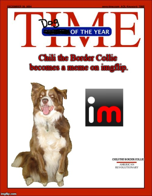 Dog of the year: Chili the Border Collie | Chili the Border Collie becomes a meme on imgflip. CHILI THE BORDER COLLIE | image tagged in dogs,border collie,chili the border collie,imgflip,memes,time magazine dog of the year | made w/ Imgflip meme maker