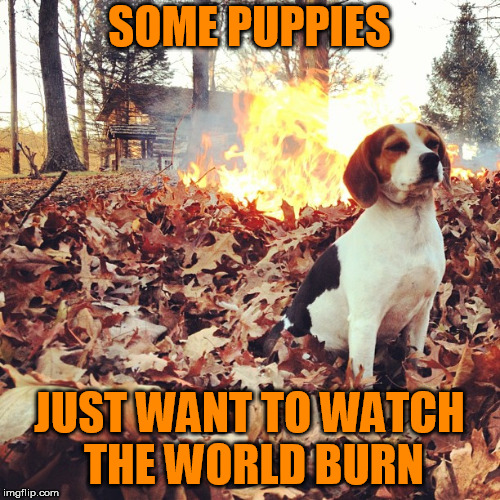 SOME PUPPIES JUST WANT TO WATCH THE WORLD BURN | made w/ Imgflip meme maker