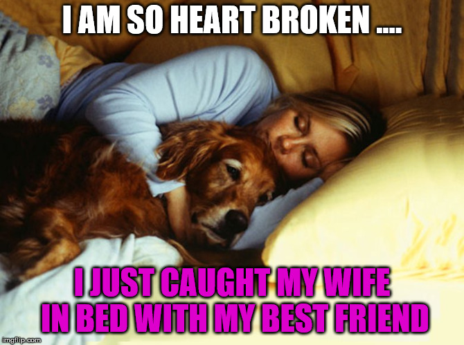 It was so devastating .....  | I AM SO HEART BROKEN .... I JUST CAUGHT MY WIFE IN BED WITH MY BEST FRIEND | image tagged in memes,sleeping dog,funny,relationships,marriage | made w/ Imgflip meme maker