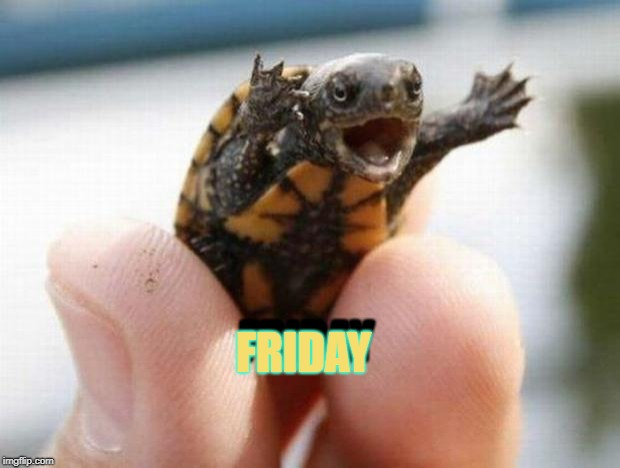 happy baby turtle | FRIDAY FRIDAY | image tagged in happy baby turtle | made w/ Imgflip meme maker