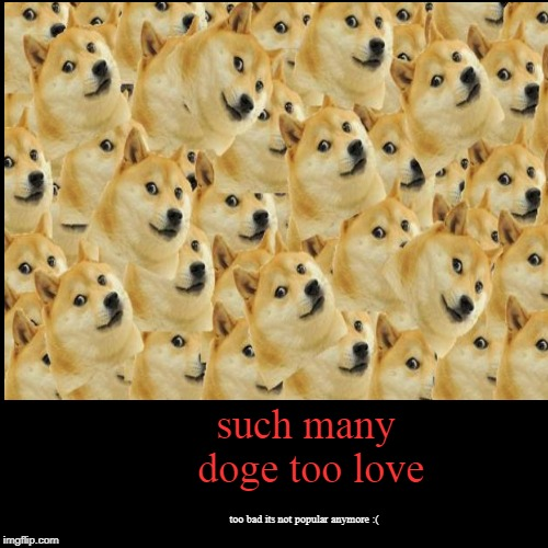 such many doge too love | too bad its not popular anymore :( | image tagged in funny,demotivationals | made w/ Imgflip demotivational maker