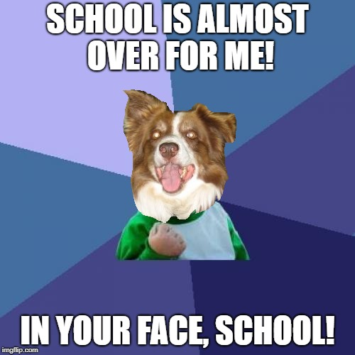 School sucks, I tell ya. | SCHOOL IS ALMOST OVER FOR ME! IN YOUR FACE, SCHOOL! | image tagged in memes,chili the border collie,dogs,border collie,i hate school | made w/ Imgflip meme maker