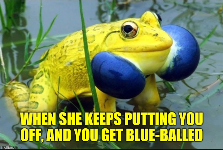 Frog Week, June 4-10, a JBmemegeek & giveuahint event! | WHEN SHE KEEPS PUTTING YOU OFF, AND YOU GET BLUE-BALLED | image tagged in jbmemegeek,giveuahint,frog week,frogs,funny animals | made w/ Imgflip meme maker
