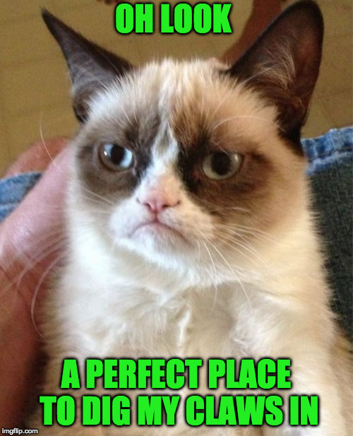 Grumpy Cat Meme | OH LOOK A PERFECT PLACE TO DIG MY CLAWS IN | image tagged in memes,grumpy cat | made w/ Imgflip meme maker