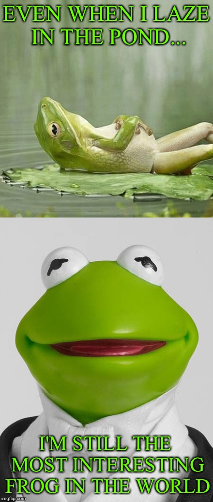 I'd vote for him, but he won't drain the swamp. | EVEN WHEN I LAZE IN THE POND... I'M STILL THE MOST INTERESTING FROG IN THE WORLD | image tagged in kermit the frog,frog week,giveuahint,jbmemegeek | made w/ Imgflip meme maker