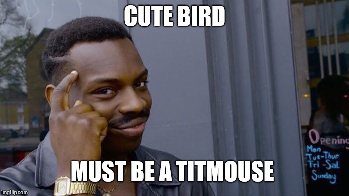 Roll Safe Think About It Meme | CUTE BIRD MUST BE A TITMOUSE | image tagged in memes,roll safe think about it | made w/ Imgflip meme maker
