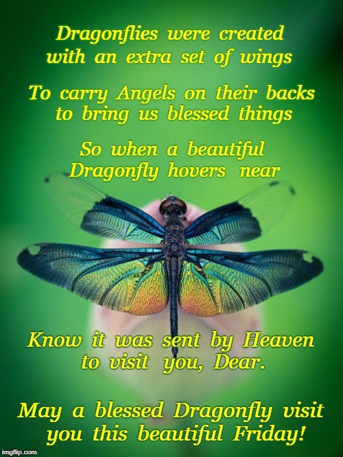 Friday Dragonfly | Dragonflies  were  created May  a  blessed  Dragonfly  visit  you  this  beautiful  Friday! with  an  extra  set  of  wings To  carry  Angel | image tagged in friday,dragonfly,angels on dragonfly | made w/ Imgflip meme maker