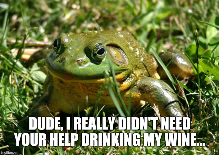 DUDE, I REALLY DIDN'T NEED YOUR HELP DRINKING MY WINE... | made w/ Imgflip meme maker