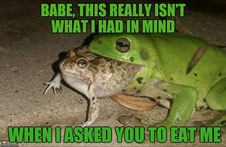 Frog Week, June 4-10, a JBmemegeek & giveuahint event!  | BABE, THIS REALLY ISN'T WHAT I HAD IN MIND WHEN I ASKED YOU TO EAT ME | image tagged in jbmemegeek,frog week,giveuahint,frogs,memes,funny animals | made w/ Imgflip meme maker