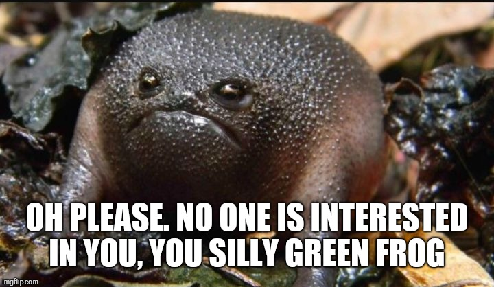 Grumpy Frog | OH PLEASE. NO ONE IS INTERESTED IN YOU, YOU SILLY GREEN FROG | image tagged in grumpy frog | made w/ Imgflip meme maker