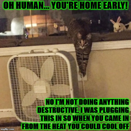 OH HUMAN... YOU'RE HOME EARLY! NO I'M NOT DOING ANYTHING DESTRUCTIVE. I WAS PLUGGING THIS IN SO WHEN YOU CAME IN FROM THE HEAT YOU COULD COO | image tagged in rotten feline | made w/ Imgflip meme maker