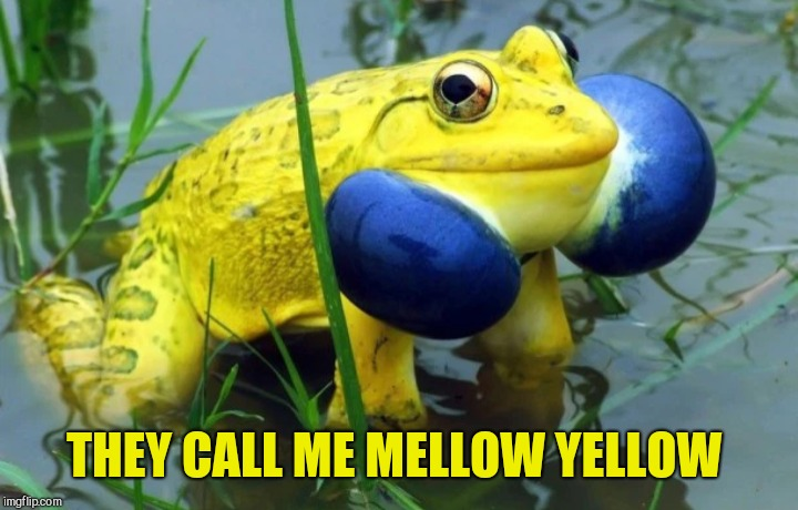 THEY CALL ME MELLOW YELLOW | made w/ Imgflip meme maker