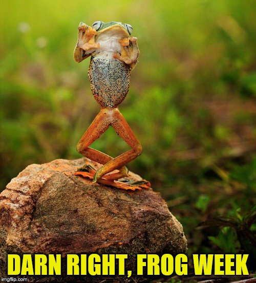 DARN RIGHT, FROG WEEK | made w/ Imgflip meme maker