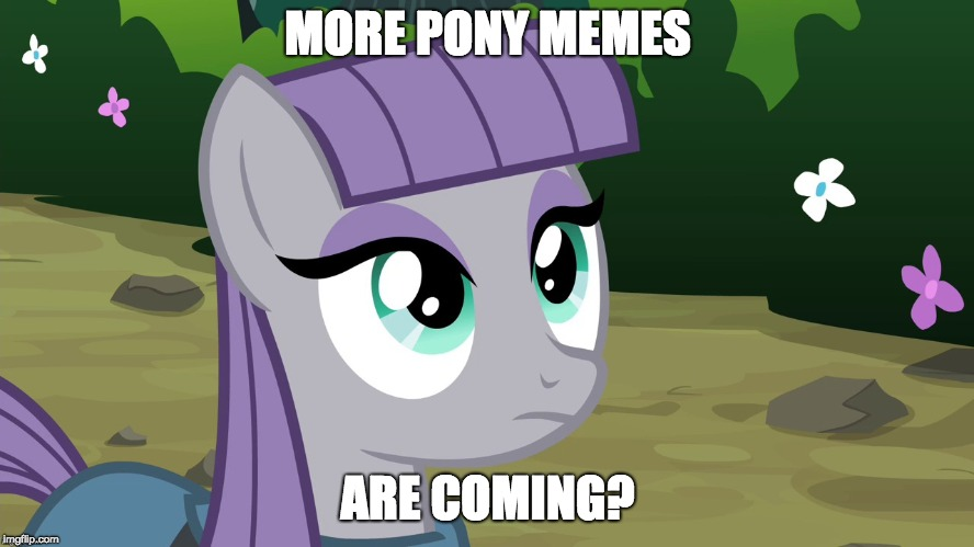 More ponies! | MORE PONY MEMES ARE COMING? | image tagged in maud is interested,memes,ponies | made w/ Imgflip meme maker