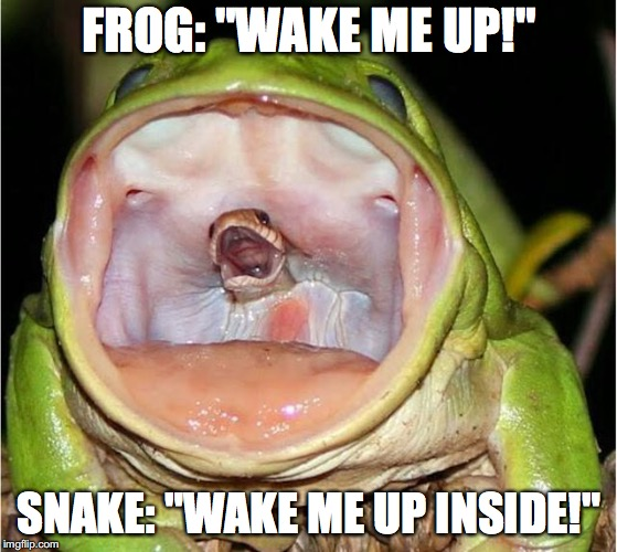 "Frog Week June 4-10, a JBmemegeek & giveuahint event | FROG: ""WAKE ME UP!"" SNAKE: ""WAKE ME UP INSIDE!"" 