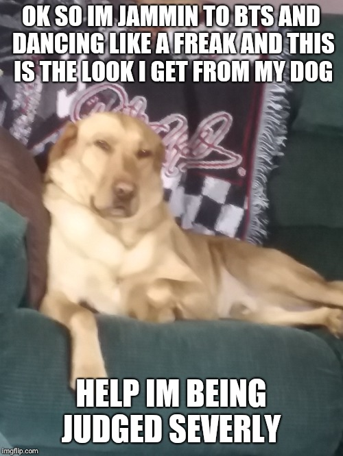 im being judged by a dog  | OK SO IM JAMMIN TO BTS AND DANCING LIKE A FREAK AND THIS IS THE LOOK I GET FROM MY DOG HELP IM BEING JUDGED SEVERLY | image tagged in dog,bts,meme,judge,fandom,army | made w/ Imgflip meme maker