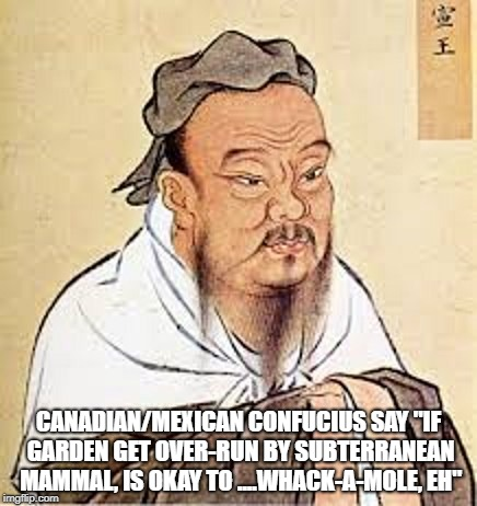 "CANADIAN/MEXICAN CONFUCIUS SAY ""IF GARDEN GET OVER-RUN BY SUBTERRANEAN MAMMAL, IS OKAY TO ....WHACK-A-MOLE, EH"" 