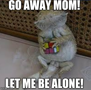 that one beared dragon be like | GO AWAY MOM! LET ME BE ALONE! | image tagged in dragon,memes | made w/ Imgflip meme maker
