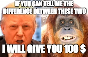 Donald trump is an orangutan | IF YOU CAN TELL ME THE DIFFERENCE BETWEEN THESE TWO I WILL GIVE YOU 100 $ | image tagged in donald trump is an orangutan | made w/ Imgflip meme maker