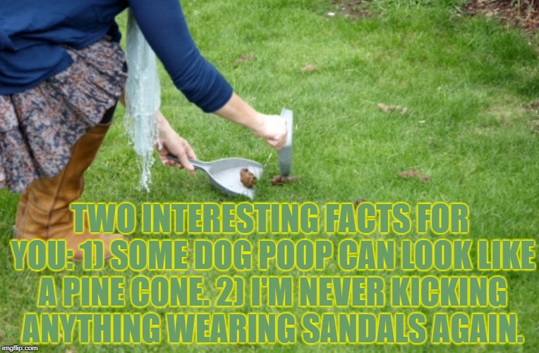 Dog poop | TWO INTERESTING FACTS FOR YOU: 1) SOME DOG POOP CAN LOOK LIKE A PINE CONE. 2) I'M NEVER KICKING ANYTHING WEARING SANDALS AGAIN. | image tagged in dog poop,funny,memes,funny memes | made w/ Imgflip meme maker