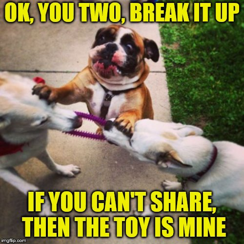 Someone had to be the adult. | OK, YOU TWO, BREAK IT UP IF YOU CAN'T SHARE, THEN THE TOY IS MINE | image tagged in memes,dogs,sharing,toys,adulting,dog fight | made w/ Imgflip meme maker