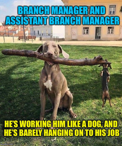 Trying to climb the corporate stick |  BRANCH MANAGER AND ASSISTANT BRANCH MANAGER; HE'S WORKING HIM LIKE A DOG, AND HE'S BARELY HANGING ON TO HIS JOB | image tagged in funny dogs,dog memes,funny dog memes,funny memes | made w/ Imgflip meme maker