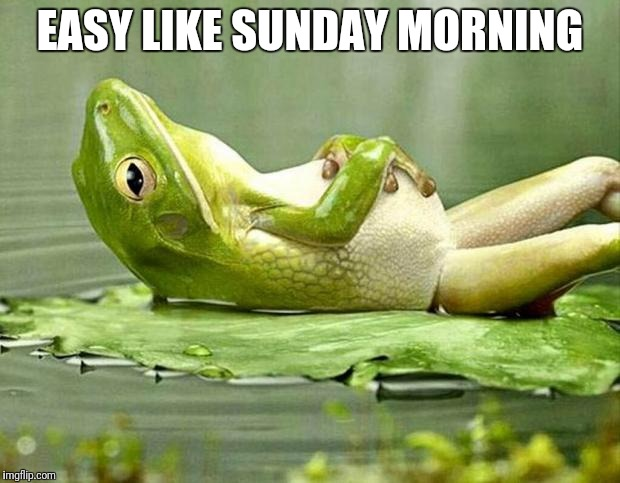 Lazy frog | EASY LIKE SUNDAY MORNING | image tagged in lazy frog,frog,frog week,meme,memes | made w/ Imgflip meme maker
