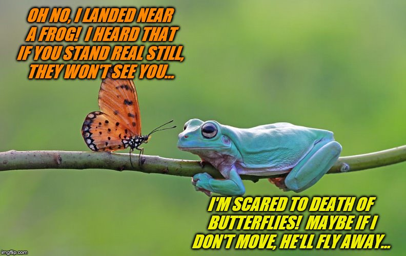 Fight nor Flight (Frog Week June 4-10, a JBmemegeek & giveuahint event!) |  OH NO, I LANDED NEAR A FROG!  I HEARD THAT IF YOU STAND REAL STILL, THEY WON'T SEE YOU... I'M SCARED TO DEATH OF BUTTERFLIES!  MAYBE IF I DON'T MOVE, HE'LL FLY AWAY... | image tagged in memes,frog week,jbmemegeek,giveuahint,butterflies,fight or flight | made w/ Imgflip meme maker