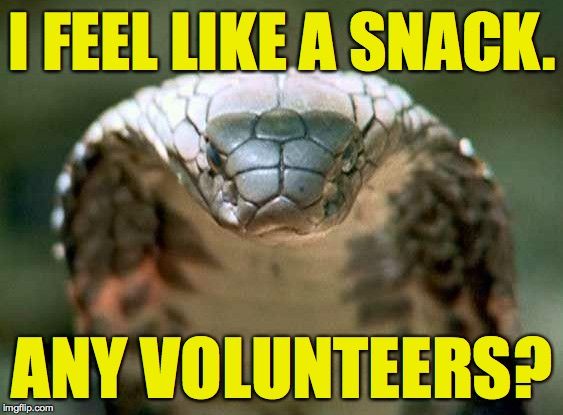 I just get so hungry! | I FEEL LIKE A SNACK. ANY VOLUNTEERS? | image tagged in good advice snake,memes | made w/ Imgflip meme maker