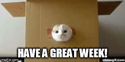 HAVE A GREAT WEEK! | image tagged in pop cat | made w/ Imgflip meme maker